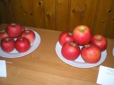 Výstava ovocia a zeleniny